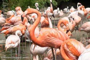 "Flamingo, Hamborg Zoo - [exif id=""1886""]"
